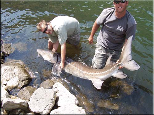 Intrepid Angler with large sturgeon he caught
